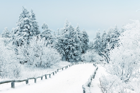 winter landscape: Winter landscape with snow covered trees