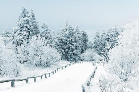 Winter landschap met sneeuw bedekt bomen Stockfoto