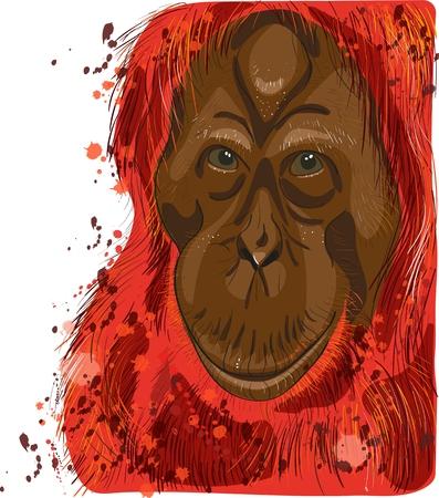 wrinkle: head and face red adult orangutan Illustration