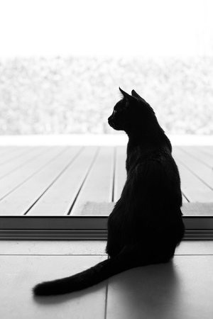 Black tomcat looking outside to a snowy landscape behind a insect guard net.