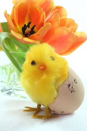 Easter chicks and tulips Stock Photo - 6470477