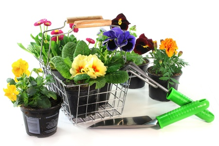 shopping basket: a shopping basket with different balcony plants