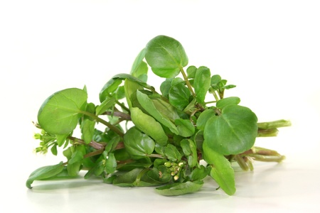 aphrodisiac: a bunch of watercress on white background