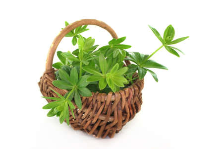 woodruff: some stems Woodruff in a small wicker basket
