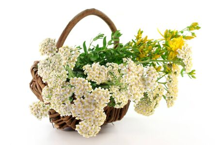fresh yarrow and St. Johns Wort in a basket  photo
