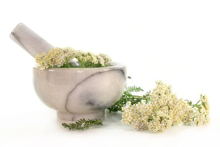 branches fresh yarrow in a mortar on white background  photo