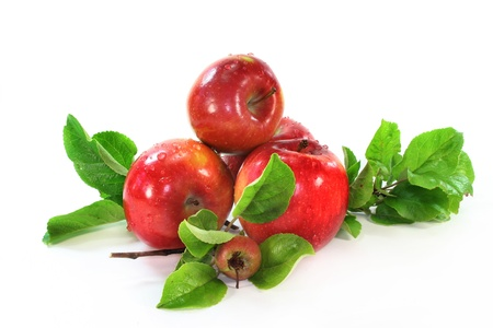 arbol de manzanas: Manzanas y hojas sobre fondo blanco Foto de archivo