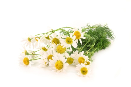 matricaria recutita: alcuni gambi di camomilla fresco su sfondo bianco