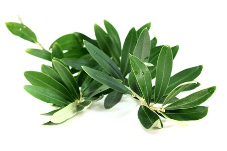 an olive branch on a white background Stock Photo