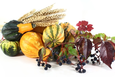 various ornamental gourds, wild grape and wheat ears on a white background photo