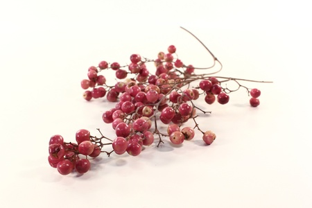 panicle: a panicle with pink pepper berries on a light background Stock Photo