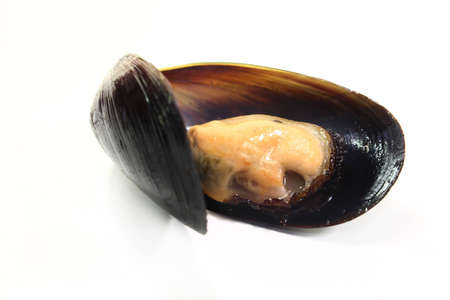 fresh cooked mussels on a of white background photo
