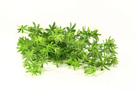 ulcers: some bedstraw stems on a light background