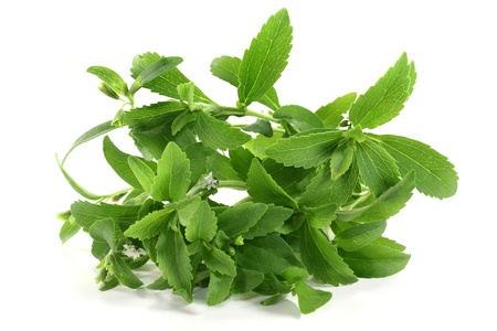 some Stevia stem on a white background Stock Photo - 14289890