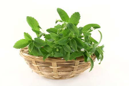 a basket with Stevia on a white background