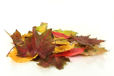 transient: different colorful autumn leaves against white background Stock Photo