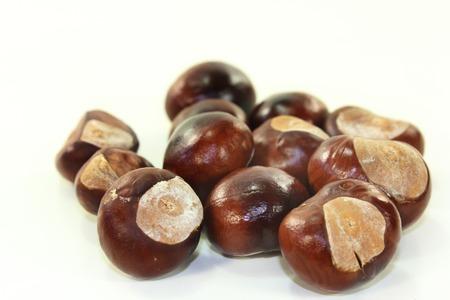 buckeye seed: freshly picked chestnuts against white background