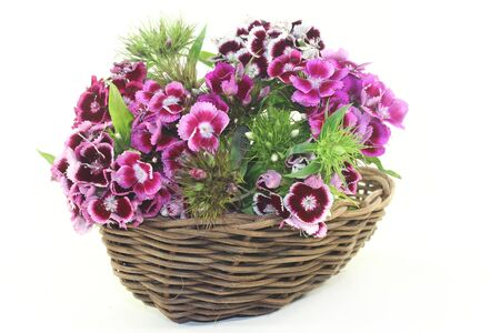 william: a bouquet of Sweet William on a light background