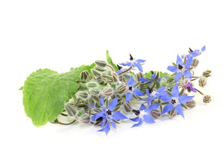 Borage leaves and flowers on a bright background Stock Photo