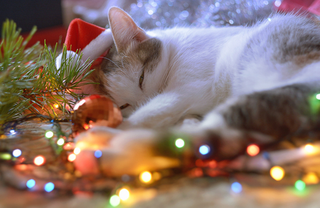 Funny New Year's cat in Santa's red hat  sleeps near the Christmas tree, gifts and garlands during preparation for the Holiday.