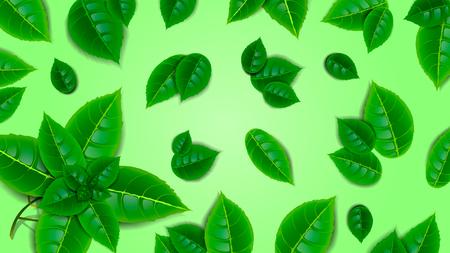Beautiful green background of fresh mint leaves. Wallpaper, design element. Illustration