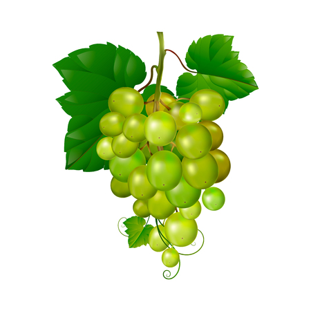 Beautiful bunch of grapes on a white background. Vectores