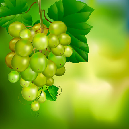 Beautiful bunch of grapes on a blurred green background. Advertising banner or label.