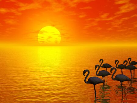 orange sunset and flamingos silhouettes
