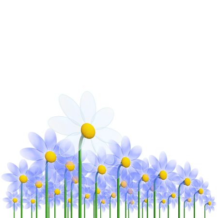 flourishing: white and blue camomiles (high resolution 3D image)