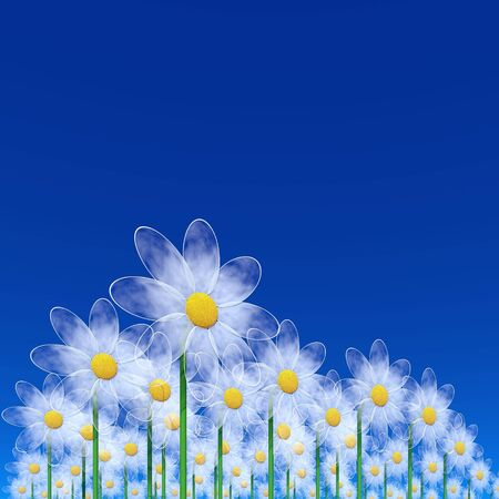 blue background with chamomiles