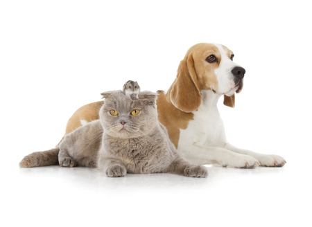 dog, cat and mouse isolated on white background photo