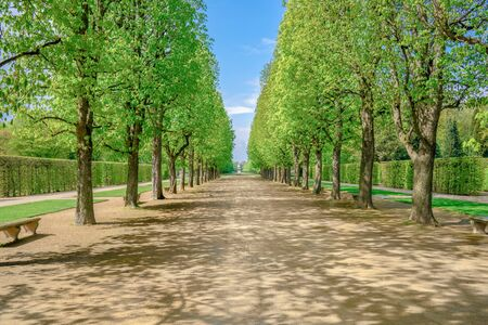 A green tree alley in the sunshine