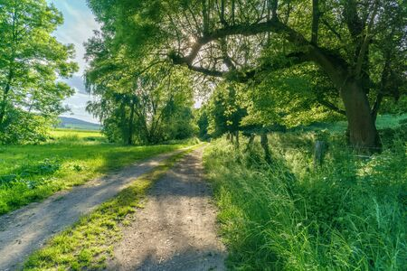 A forest path in summer with sunshine Stok Fotoğraf - 149207554
