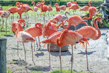 A flock of red flamingos by the water, outside Stok Fotoğraf
