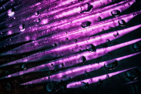 A purple abstract macro background with a gradient pattern