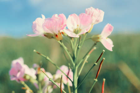 Dreamy pink flower in bloom close-up view Stok Fotoğraf - 151665733