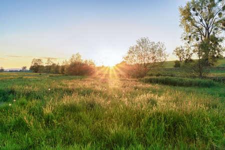 An idyllic evening landscape on a meadow field Stok Fotoğraf