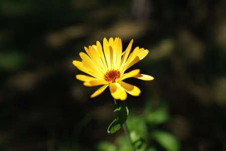 Close up view of a beautiful yellow flower, close-up view