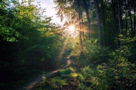A sunset on a small idyllic forest path Stok Fotoğraf - 152609853
