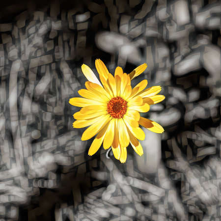 Yellow flower on an abstract black and white background, close-up Stok Fotoğraf - 152610307