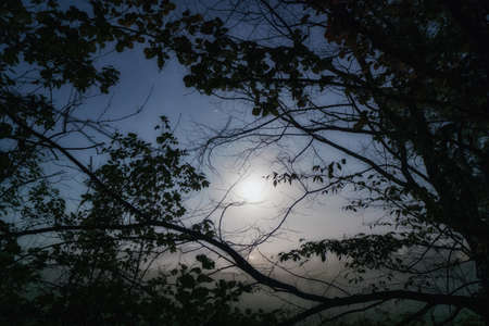 Foggy moon atmosphere in the morning between dark branches 免版税图像