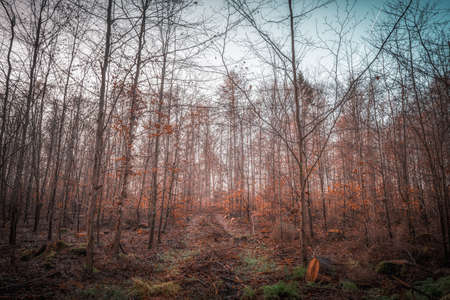 A sunlit forest on a December morning in an autumnal atmosphere