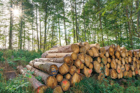 Pile of wood in the sunny forest