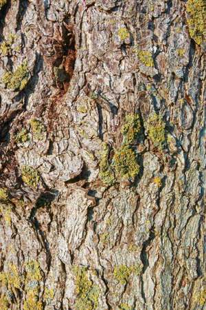 Tree bark from an old tree occupied with moss, closeup view Stok Fotoğraf