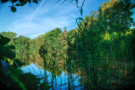 A beautiful nature environment on a small pond, dreamy atmosphere