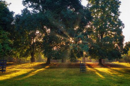 A wonderful warm sunrise on a summer morning. The sun shines through the trees Stok Fotoğraf