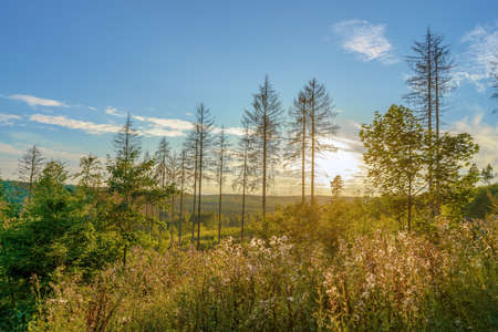 A wonderful view at sunset over the forest valley in the evening, outdoor shot Stok Fotoğraf