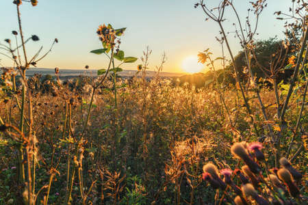 A wonderful sunset in the evening on a meadow of flowers between the plants in an atmospheric mood, outdoor shot Stok Fotoğraf