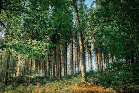 A sunlit forest on a December morning in a sunny atmosphere