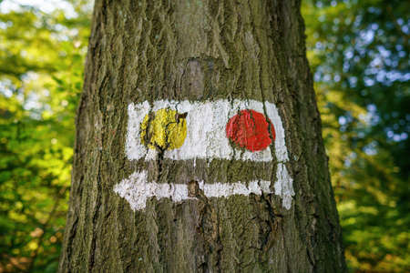 A tree trunk labeled with signposts and symbols Stok Fotoğraf